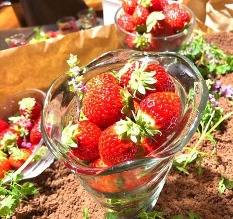 【ホテルグランヴィア大阪】おいしいイチゴたっぷり!「ストロベリー&スイーツ ナイトブッフェ」